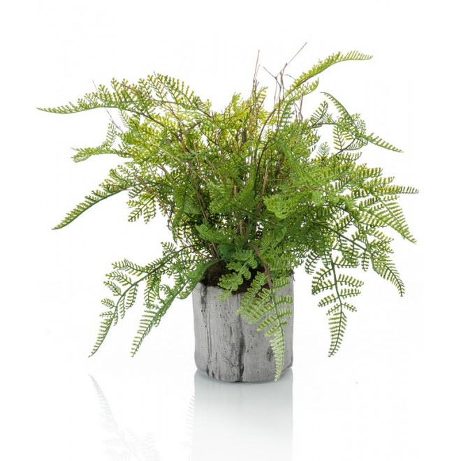 fougère en pot 32 cm