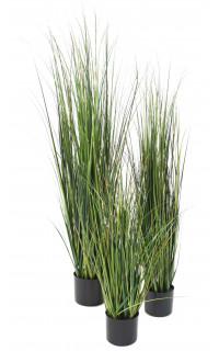 onion grass bambou 90 à 150 cm