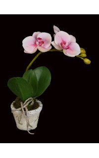 composition Phalaenopsis ORCHIDEE artificielle EN POT TC 28 cm
