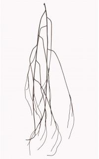 BRANCHE souple de bois marron artificielle 160 cm