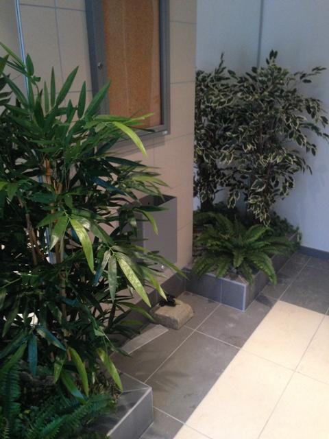 bambou new et ficus vert blanc